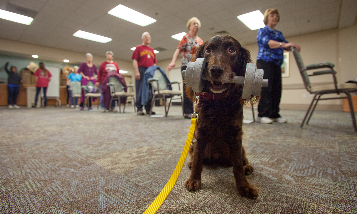 Canines and senior citizens are paired in a unique FSU fitness study.