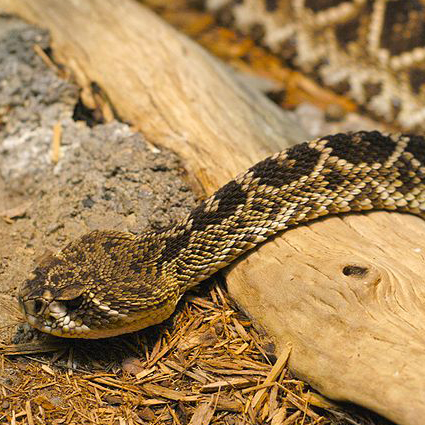 New research shows snake venom varies by geography.