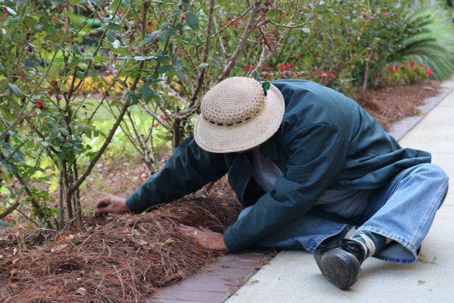 Rebecca Andrews, a member of the Florida State University garden maintenance team.