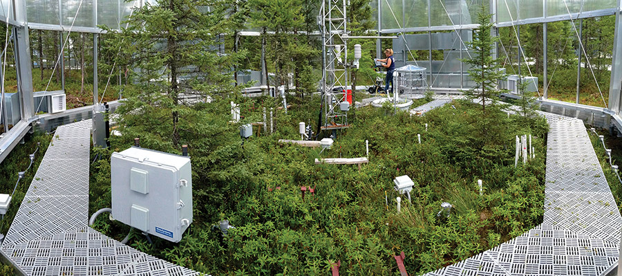 ORNL's Jana Phillips measures surface CO2 and CH4 exchange in the back of a typical SPRUCE enclosure. Image credit: Oak Ridge National Laboratory/U.S. Department of Energy.