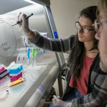 The work being done by FSU undergraduate biology students puts the university on the vanguard of international CRISPR education and research.