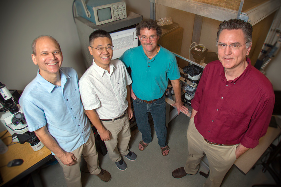 Professors Rick Hyson, Wei Wu, Richard Bertram and Frank Johnson lead a unique interdisciplinary unit at FSU focusing on how electrical brain impulses in a bird translate into a behavior. They say birdsong is a good model to understand how the human brain learns speech.