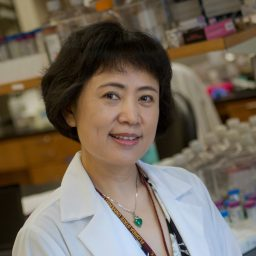 Yi Ren is a professor of biomedical sciences at the Florida State University College of Medicine.