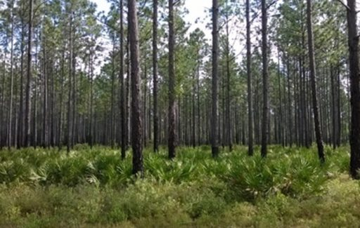 Apalachicola National Forest is the largest U.S. National Forest in the state of Florida, encompassing 632,890 acres.