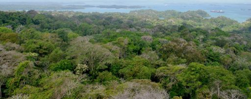 Pau conducted her research on the remote Barro Colorado Island, located in the middle of the Panama Canal.