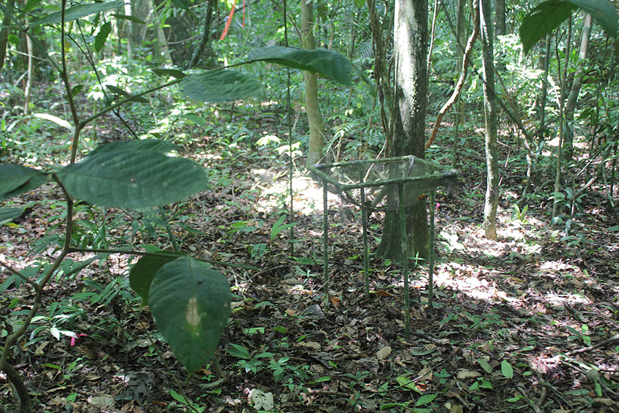 Pau and her colleagues set up discreet traps throughout the forest to monitor flower activity.