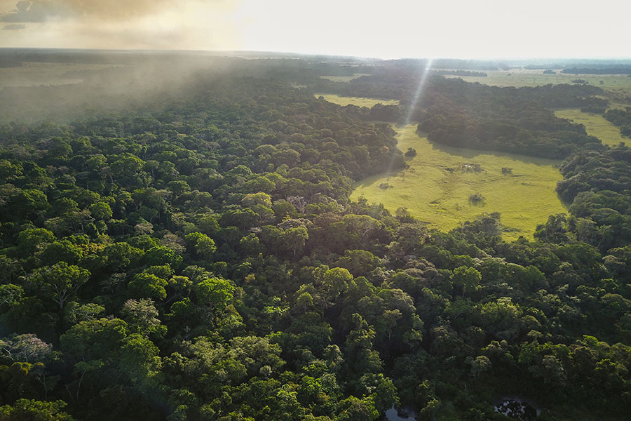 High levels of nitrogen deposition could be over-fertilizing the lush Congolese forests, ultimately leading to reduced biodiversity.
