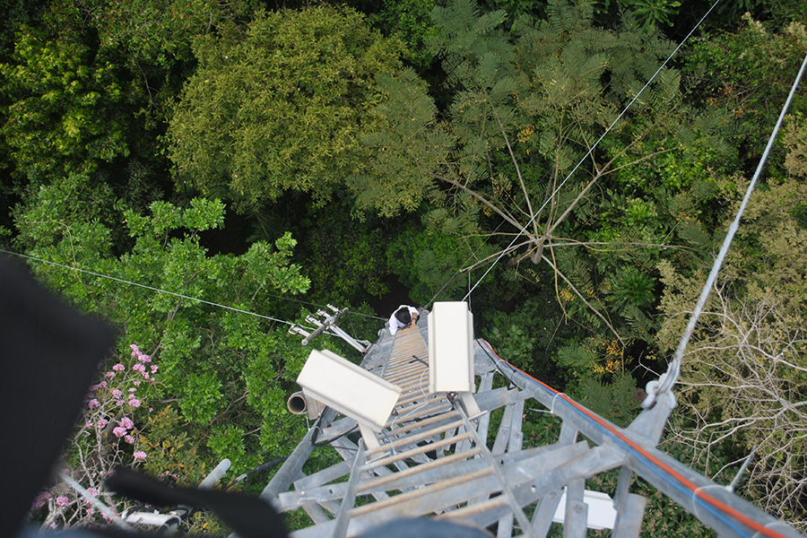 Perched in towers high above the treetops, Pau and her team had a panoramic view of the forest canopies.