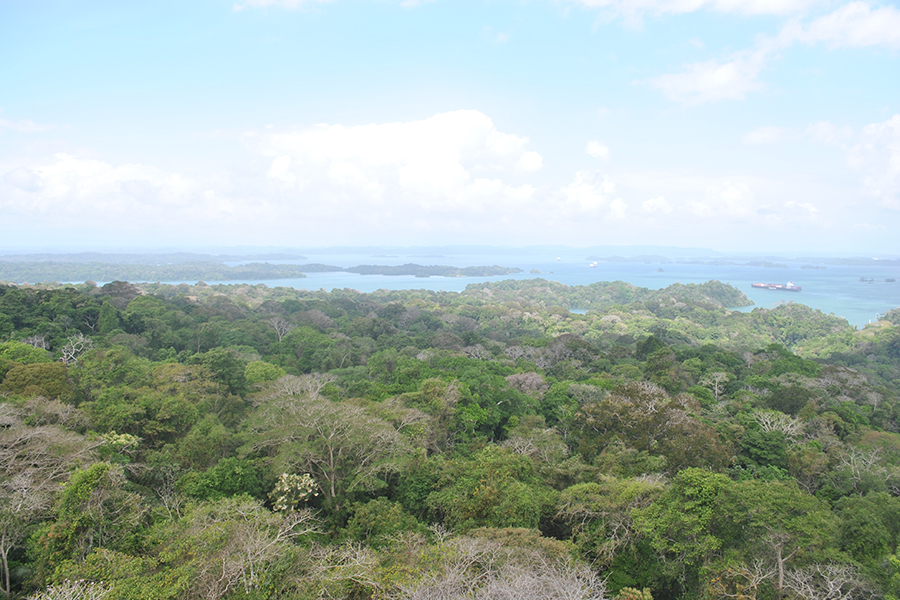 Changing temperatures in the forest canopies of Panama's Barro Colorado Island could mean major consequences for overall forest health.
