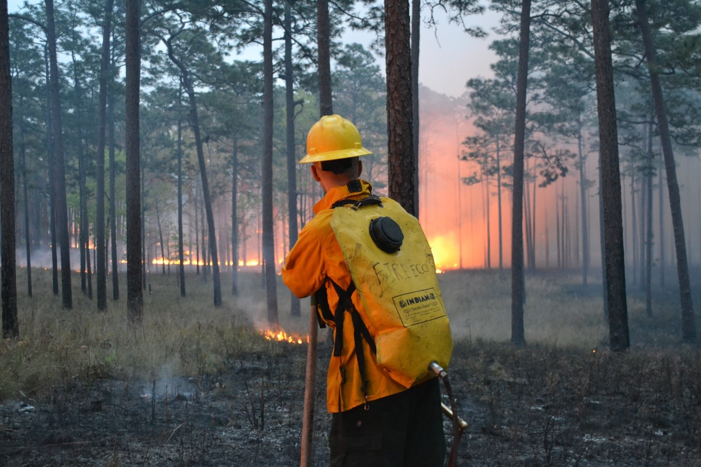 Austin Dixon of the Tall Timbers Research Station and Land Conservancy monitors a prescribed burn.