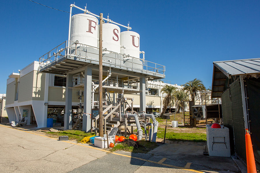 The lab is ideally situated to explore the unique combination of factors that have led to the oyster fishery collapse in Apalachicola Bay.