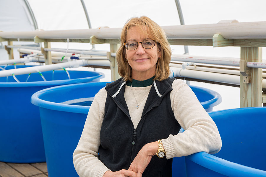 Researcher Sandra Brooke will be the scientific director of ABSI and lead the research into what caused the collapse of the oyster fishery and how to move forward.