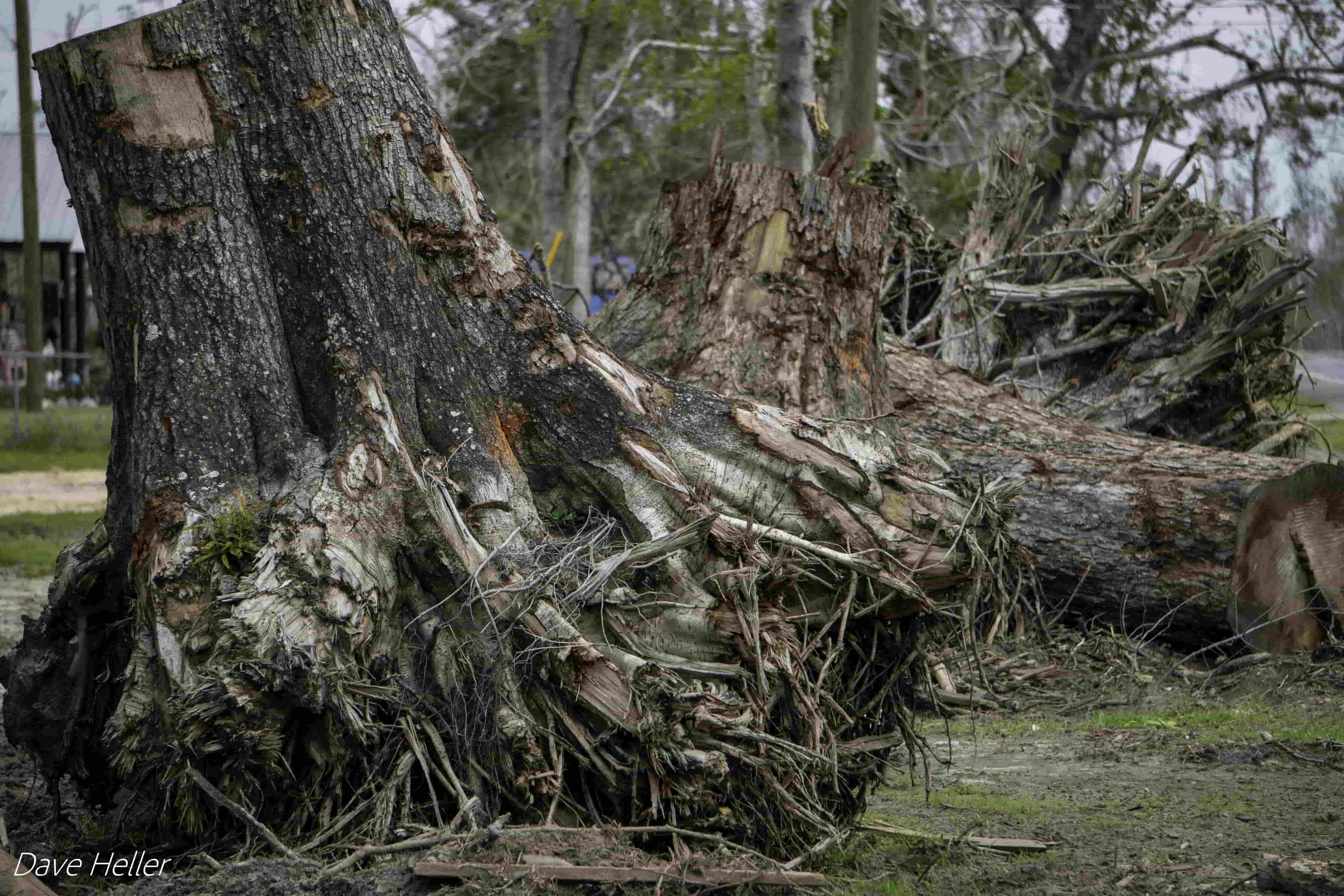 Officials warn that the thousands of uprooted trees and carpets of fallen limbs littered throughout North Florida could provide fuel for potentially catastrophic fires. Credit: Dave Heller
