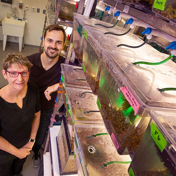 Professor of Biological Science Kimberly Hughes and postdoctoral researcher Mitchel Daniel examined the reasons behind guppy mating choices.
