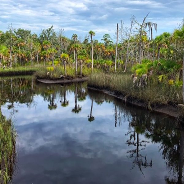 At 80,000 acres, the St. Marks Wildlife Refuge is larger than Orlando. (Photo Courtesy of William Cutter)