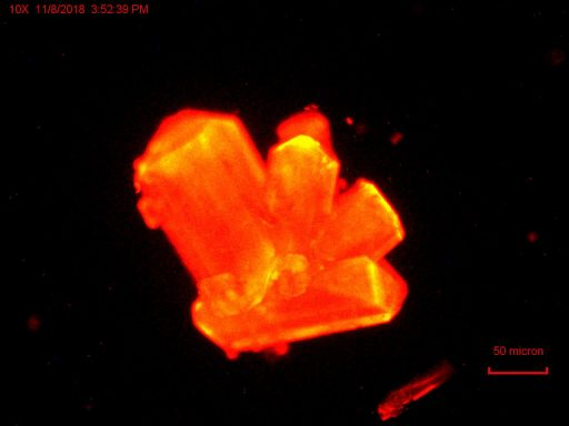 Curium crystals with an orange glow, which the researchers used to monitor the changes in chemistry as they applied pressure. Courtesy of Thomas Albrecht-Schmitt / Nature