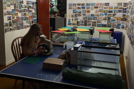 Morgan Hawkins, an FSU senior studying marine biology, works in the lab she and senior Benton Jaco built in her home. (Courtesy of Benton Jaco)