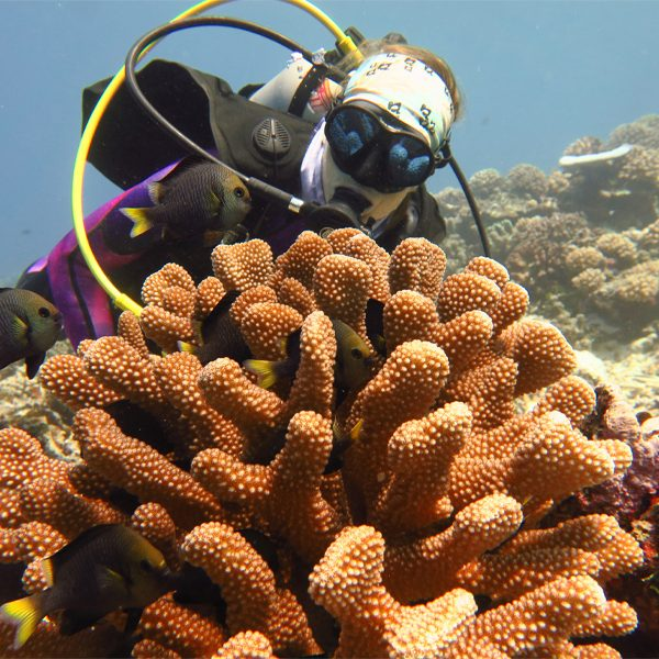 Erika Johnston, a postdoctoral researcher in the Department of Biological Science and a co-author of the paper, at a coral reef in Moorea. (Florida State University/Christopher Peters)