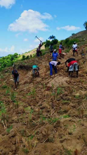 Communities in Haiti planting grass on eroded slopes. Note: The grass establishes ground cover in a mere three months to stabilize the slopes and reduce mudslides during hurricanes.