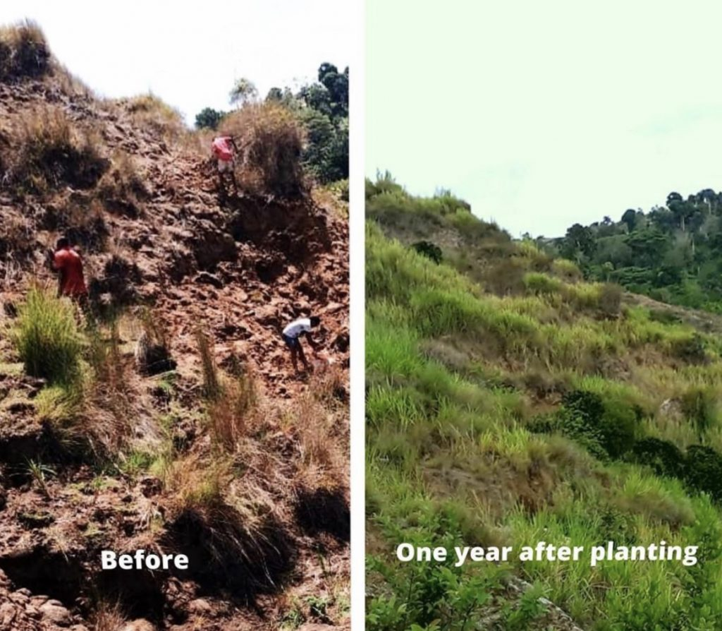Landscape in Haiti before and one year after planting perennial grasses. <b>Note:</b> The grasses hold the soils in place to reduce soil erosion on the steep slopes