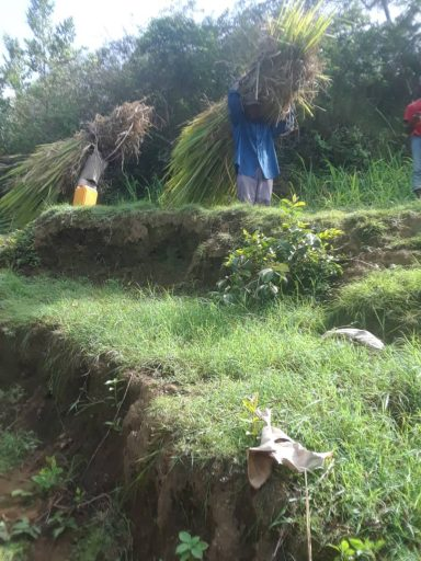 Villagers carrying grass to plant on the mountain slopes. Note: The grass seedlings are established in nurseries and then transferred for transplanting on the mountain slopes. The tops and leaves are fed to livestock and the rootstocks planted for erosion control.