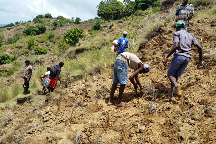 Villagers in Haiti planting grass on eroded slopes to reduce soil erosion