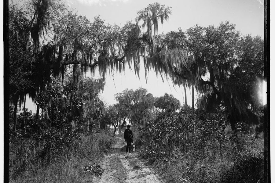 Archival photograph (c. 1880-1897) of a man walking down a dirt road under trees with Spanish moss; near Rockledge, Florida. (Photo courtesy of Library of Congress)