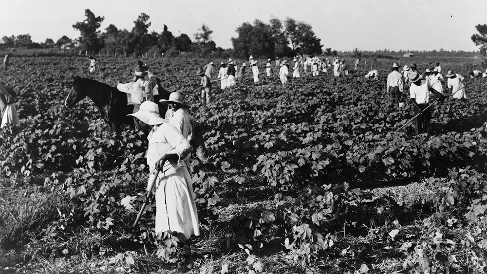 Summary: Archival photograph (1937) of a crew of two hundred colored hoers brought to the Aldridge Plantation to hoe cotton at one dollar a day. Many of them are ex-tenant farmers. Near Leland, Mississippi. Source: Library of Congress; https://www.loc.gov/item/2017770127/
