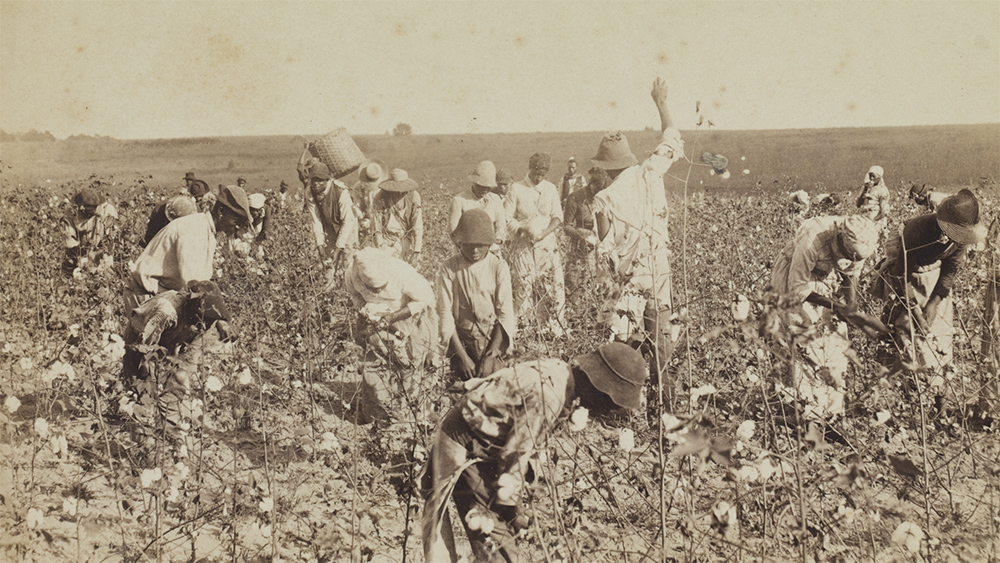 Archival image of a group of enslaved workers picking cotton in Thomasville, GA (Photo courtesy of Smithsonian National Museum of African American History & Culture)