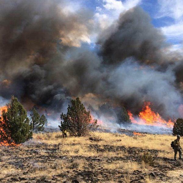 A veteran firefighter walks through a blaze in Oregon. (Caleb Strough/Bureau of Land Management)